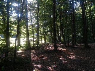 Дачный участок на окраине Вадул луй Вод. 7 соток. В лесу, недалеко от Днестра.