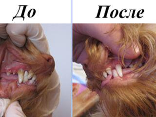 Ультрозвуковая чистка зубов животным