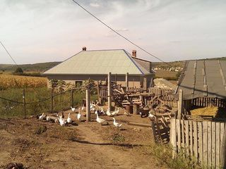 Ferma in Ustia !!! raionul Dubasari