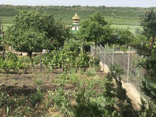 Vînd teren pentru vila amplasat ÎP Vierul.