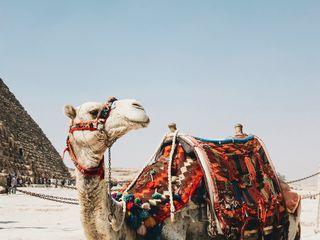 Marea Roșie și plajele sale din Egipt- zbor direct din Chișinău de la 384 euro!!!