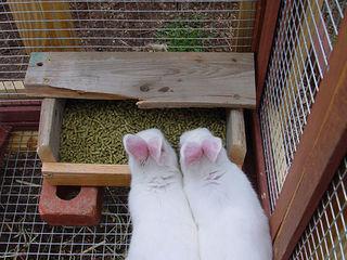 Granule pentru iepuri cu vitamine si standart producem livrare