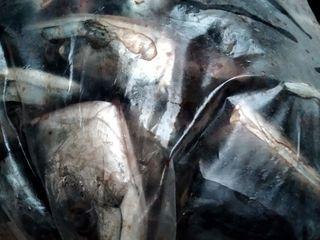 Рыбный деликотесс для животных и птиц