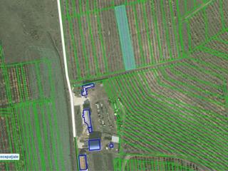 Pamint arabil ( 0,2677 ha ) livada de prune
