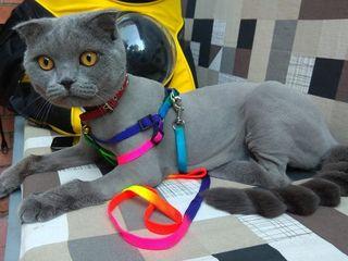 "Grooming pisici fara sedare!Зоосалон ""Mister Dog"" предлагает! Стрижка кошек без седации 260 л!"