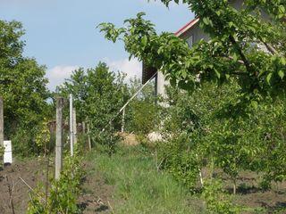 Дачный участок, с Домом, садом и виноградником