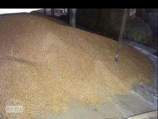 Vind grăunțe 2.50/kg Rezina