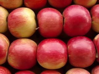 Куплю яблоки Чемпион, Айдаред, Флорина и другие для экспорта!