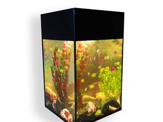 """Доставка от зоосалона """"мистер дог"""" предлагает нано-аквариумы 10-20-25-30 литров от 450 лей"""