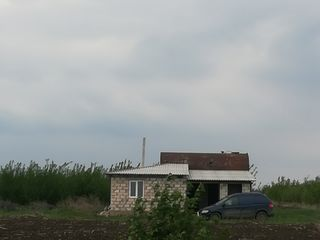 Urgent vind livada de prune 7 hectare cu casa