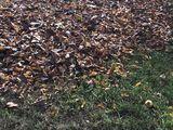 Уборка листьев!