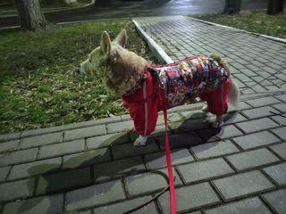 Одежда для собак по себестоимости
