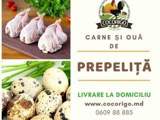 Carne proaspta   CocoRigo.md  livrare la Domicilui raza Chisinau