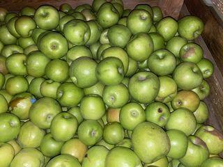Vindem mere Gala Semerenco Grani Smith 4-5 lei/kg pentru piata locala la bus sortul 2