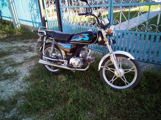 Alpha moto moped