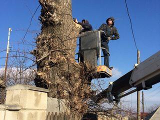 Tăierea copacilor înclinați sau deteriorați, lucrari la inaltime -Autoturn