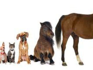 farmacie veterinara, zoomagazin buiucani