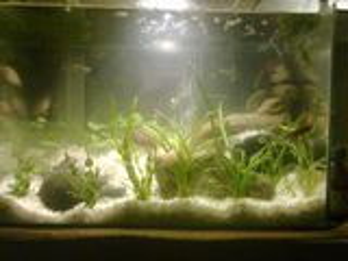 Уход и обслуживание аквариума любой сложности и объема и личение рыбок