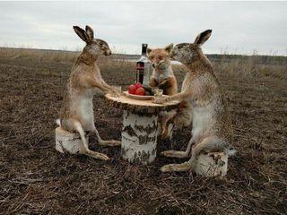 Carne de iepure