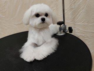 """Модельные стрижки для собак в салоне """" Mako"""""""