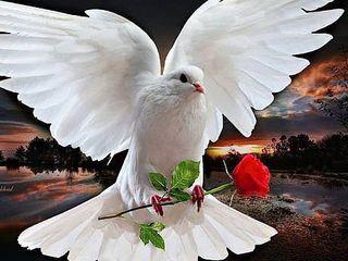 Servicii> Porumbei albi, cu livrarea gratuita in raza Chisinaului!