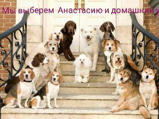 """Домашняя гостиница для животных """"Анастасия"""" у нас всё как дома и без стресса!"""