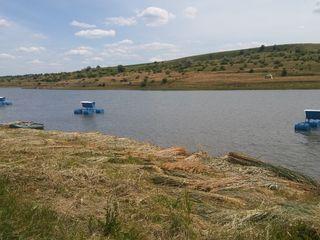Озеро в субаренду