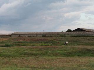 Продам ферму и часть территории