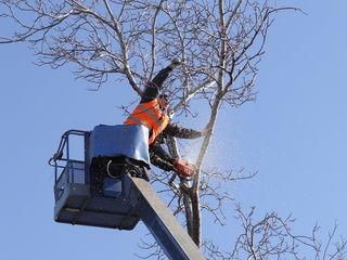 Tăierea copacilor și crengilor