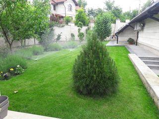 oferim servicii de cosirea si ingrijirea gazonului arborilor si arbustilor  din gradina dumneavoastr