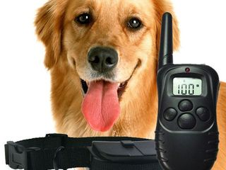 Электронный радиоошейник axsel fox pt-100