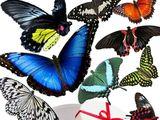 Салют из живых тропических бабочек.