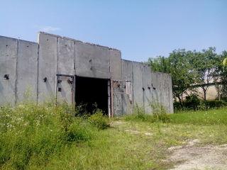 Леушены ,почти на Границе с Румынией 12000м2 - 9 га  земли  , птице-фермы  ,продажа обмен