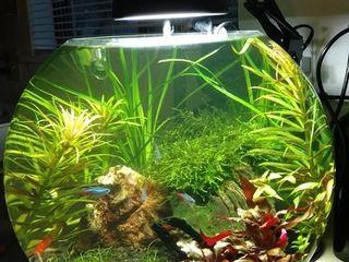 Создам долговечные маленькие аквариумы с живыми растениями.