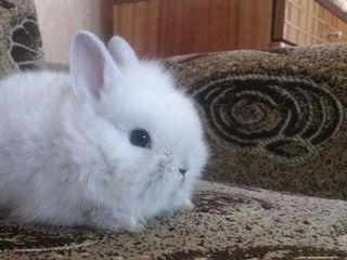 Kарликовые ангорские кролики !