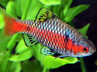 Продам рыбок,аквариумные растения, креветoк и оборудование для аквариума