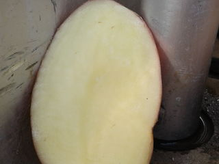 Сбываю оптом картофель  из Беларуссии