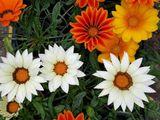 Садовые цветочки !!!