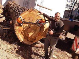 Вам нужно спилить дерево? Расчистить участок от деревьев? Обрезать ветки? Удалить пень?