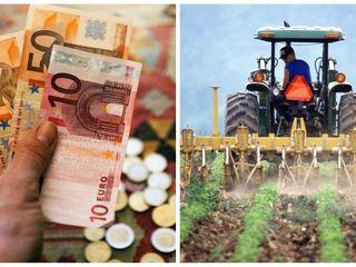 Servicii de contabilitate in Agricultura