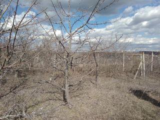 Продам недорого земельный участок 0, 23 Га с/хоз назначения при вьезде в Кишинёв