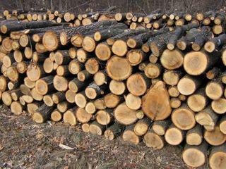 Vind lemne de fok.