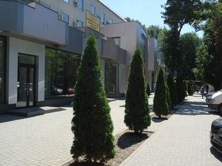 Chirie oficiu, 58 mp, euroreparație, Botanica, 7 € !