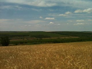 430 Га аграрных земель (консолидация 100 %!) + озеро.
