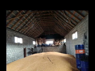 Porumb 10t. 4l/kg кукуруза 10т.