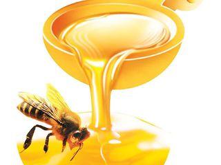 Закупаем  мёд / cumparam miere