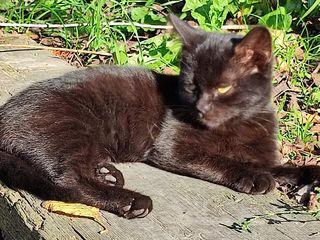 Подарю котёнка красавчика