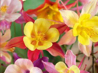 Seminte de legume si flori in asortiment marca comerciala gavrish! angro
