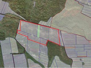 Livada de nuci 60 hectare Telenesti vinzare