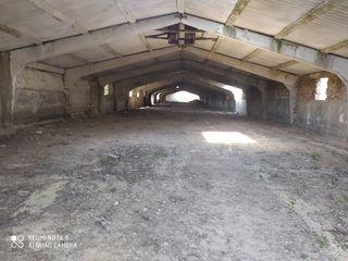 Încăpere industriala(ferma de pasari)